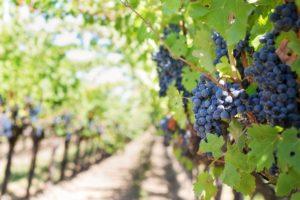 wine translations Signewords