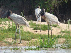 Signewords ecotourism translation